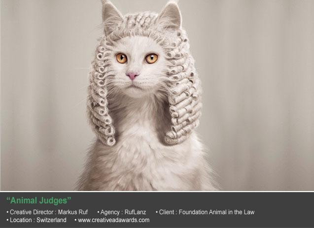 Animal Judges
